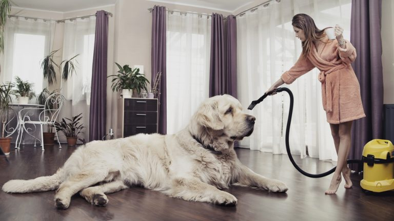 vacuum for pet hair