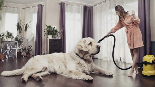 Top 8 Best Vacuum For Pet Hair Aug 2019 With Buying Guide