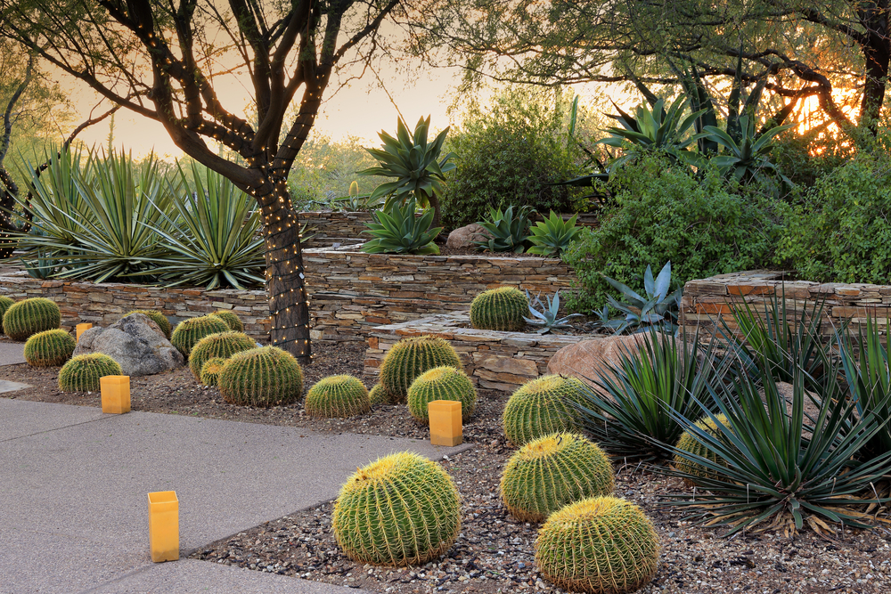 Xeriscaping example