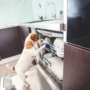 Cute dog and dishwasher