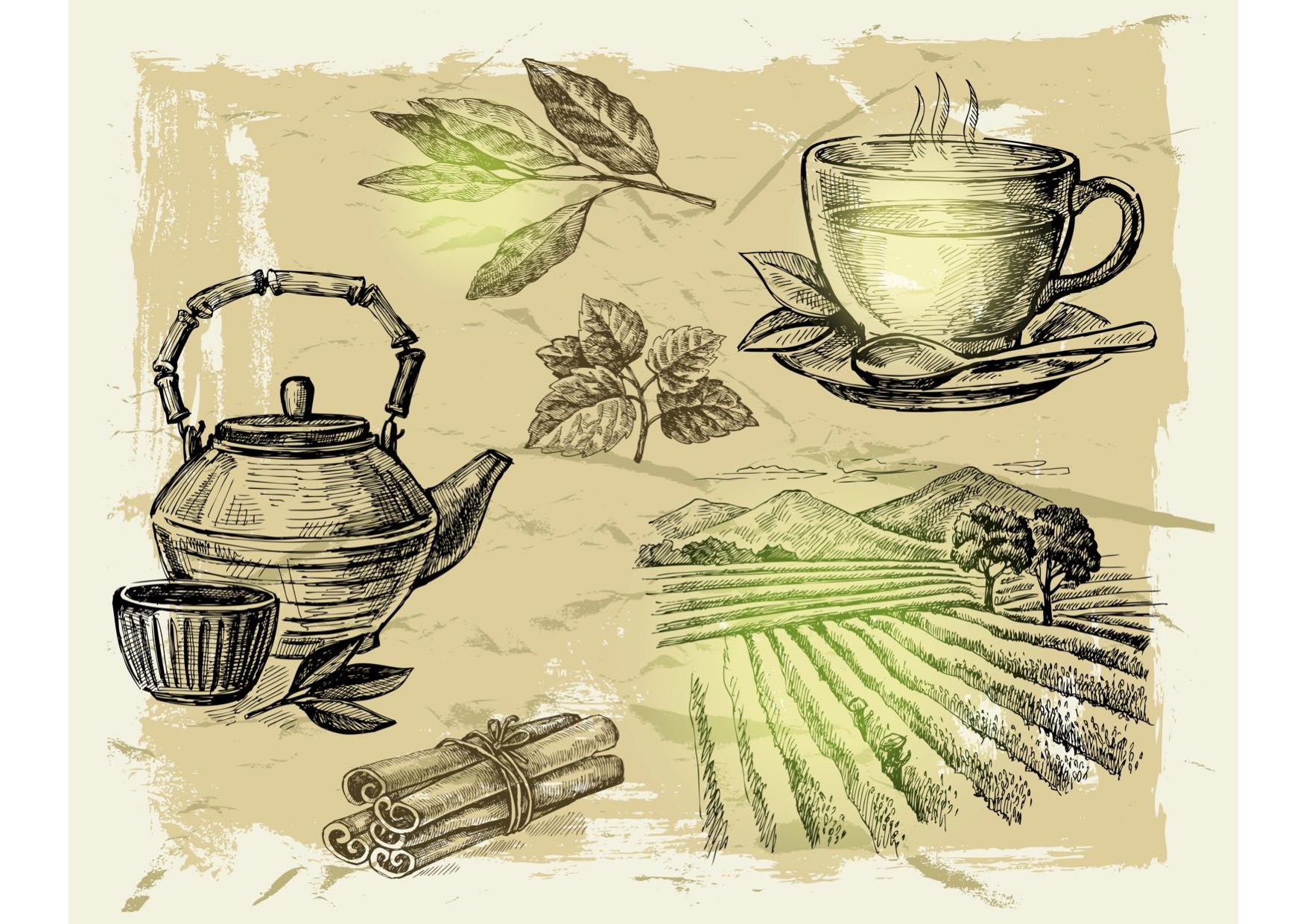 chinese origins of green tea